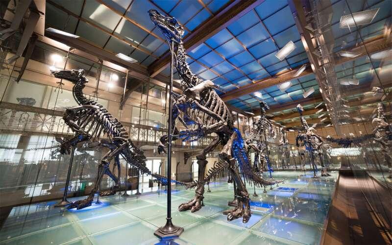 Museum für Naturkunde Raum Innenansicht