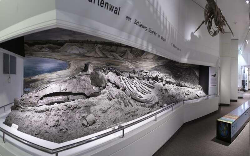 Dinoskelett
