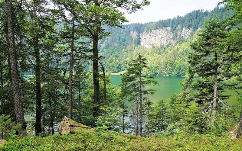 Wald im Feldberg